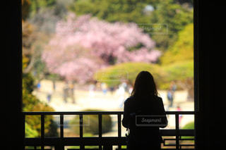 春,桜,後ろ姿,シルエット,背中,色彩,小旅行
