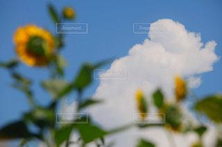 夏休み。の写真・画像素材[2412709]