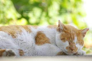 猫,動物,自由,景色,ペット,人物,野良猫,お昼寝,日向ぼっこ,ネコ,物語