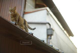 猫,動物,散歩,ペット,屋根,癒し,野良猫,ネコ,物語
