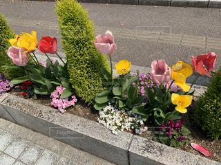 公園,花,屋外,チューリップ,花壇,草木,ガーデン,フローラ