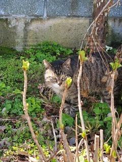 自然,ネコ,悪猫