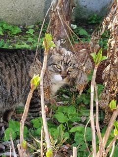 猫,自然,風景,動物,屋外,地面,草木,ネコ,悪猫