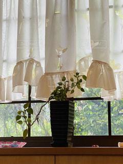 屋内,花瓶,窓,カーテン,壁,観葉植物