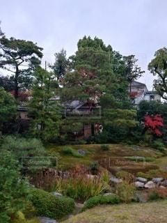 秋,森林,屋外,京都,樹木,庭園,草木