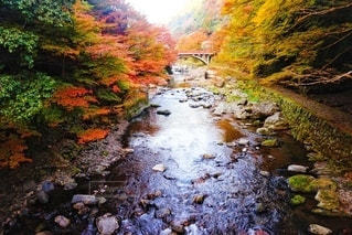 自然,風景,秋,橋,紅葉,森林,屋外,緑,赤,黄色,川,水面,もみじ,山,景色,滝,樹木,岩,河,石,休日,ハイキング,リフレッシュ,草木,カエデ