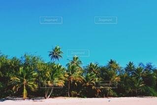 風景,空,夏,屋外,海外,緑,南国,ビーチ,晴れ,青,砂浜,海岸,樹木,旅行,ブルー,ヤシの木,リゾート,グリーン,海外旅行,ホリデー,パームツリー,リゾート地,草木,パーム,日中,晴れの日,休暇,南国風景