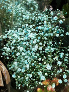 風景,花,かすみ草,青,樹木,ブルー,草木,ガーデン,カスミソウ