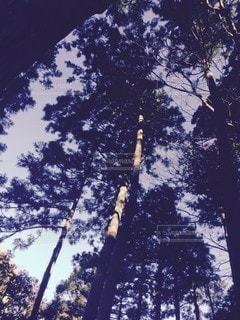 自然,空,木,樹木,草木,迫力,圧倒