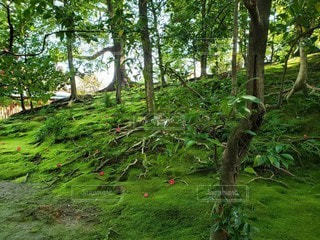 花,森林,緑,幻想的,お花,椿,樹木,苔,新緑,不思議,こけ,城南宮