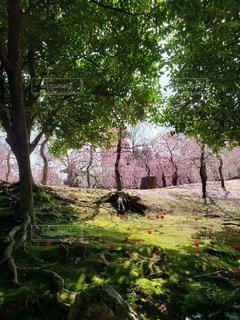 森林,緑,梅,幻想的,お花,椿,苔,新緑,不思議,こけ,開花,城南宮