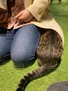 猫,可愛い,猫カフェ,入る,そんなとこ,ヒョウ猫