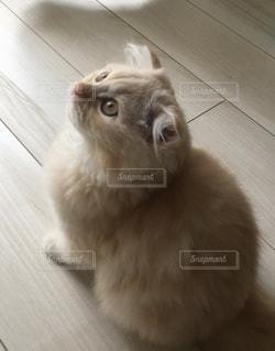 真剣な眼差しの子猫の写真・画像素材[3384036]
