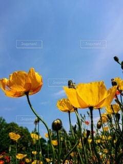 花の写真・画像素材[3207468]