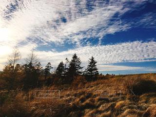 自然,風景,空,屋外,景色,草