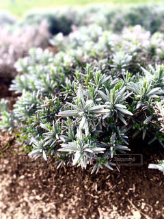 観葉植物,ポートレート,グリーン,草木,ガーデン,フローラ