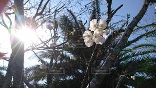 自然,風景,空,花,春,屋外,樹木,草木,ブロッサム