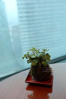 花,花瓶,テーブル,観葉植物,草木