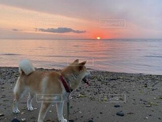 海辺に立つ愛犬と朝陽の写真・画像素材[3616081]