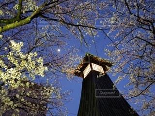 風景,空,建物,桜,樹木,月,花木