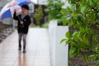 子ども,風景,雨,傘,屋外,子供,草,道,人,歩道,地面,幼児,少年,草木,雨の日