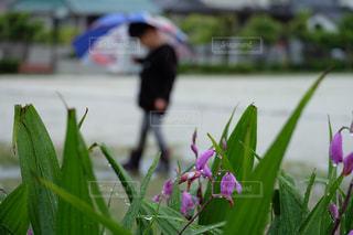 子ども,自然,花,雨,傘,屋外,草,長靴,水溜り,梅雨,草木,雨の日