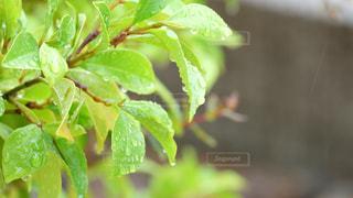 自然,雨,屋外,葉,梅雨,草木,雨の日,雨草