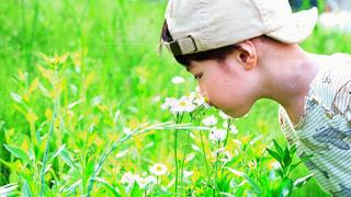 花の匂いを嗅ぐ少年の写真・画像素材[3210456]