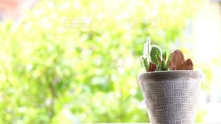 植木鉢のサボテンの写真・画像素材[3247206]