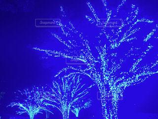 夜空にイルミネーションの写真・画像素材[3448835]