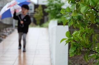 傘をさす男の子の写真・画像素材[3674756]