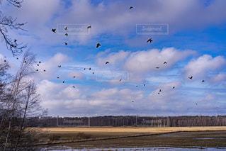風景,空,鳥,屋外,飛ぶ,北欧,群れ,フィンランド