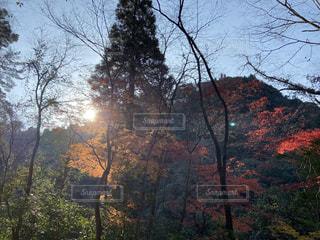 自然,風景,空,秋,紅葉,森林,屋外,太陽,緑,赤,山,景色,樹木,草木,山景