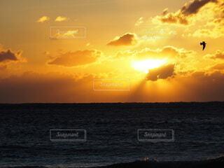 自然,空,鳥,屋外,太陽,朝日,ビーチ,雲,水面,朝焼け,正月,お正月,日の出,新年,初日の出