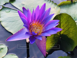 紫色の花の写真・画像素材[3225972]