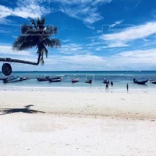 タオ島の写真・画像素材[3245691]