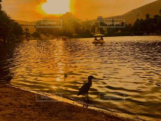 オアシスの夕暮れ時の写真・画像素材[3254397]