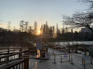 空,公園,池,日没,樹木