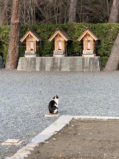 猫,動物,神社,主