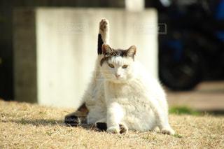 猫,動物,にゃんこ,屋外,白,かわいい,黒,景色,草,ペット,子猫,座る,ポーズ,ヨガ,お散歩,一眼レフ,ダイエット,フィットネス,ネコ科の動物