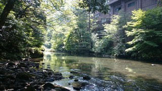 自然,風景,森林,屋外,川,樹木
