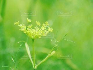 花のクローズアップの写真・画像素材[3340047]
