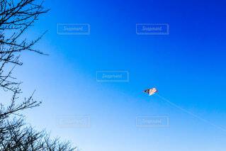 青空と凧上げの写真・画像素材[4045161]