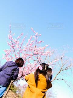 青空と桜の写真・画像素材[4210701]