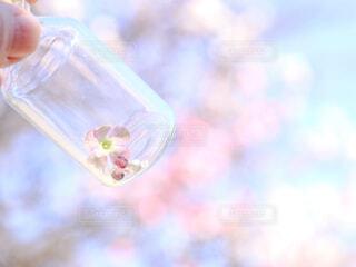 瓶の中な花の写真・画像素材[4231380]
