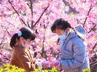 河津桜と少女の写真・画像素材[4232012]
