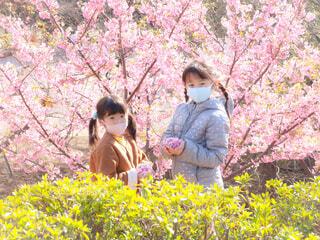花びらを持つ少女たちの写真・画像素材[4232020]