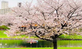 桜とカヌーの写真・画像素材[4297748]