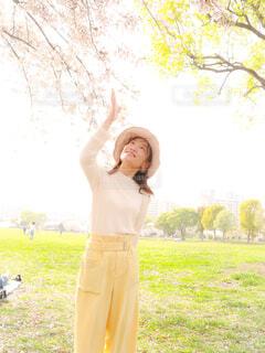 桜を愛でる女性の写真・画像素材[4306015]