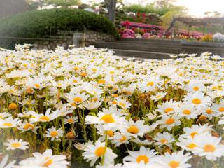花畑の写真・画像素材[4334049]
